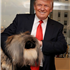 Look who's secretly a softie! The Donald snuggles up to the Pekingese later that day during a visit at Trump'...The Westminster winner chows down in New York.