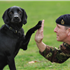 Army dog handler Sergeant David Heyhoe and army explosives search dog Treo, from 104 Military Working Dogs, during a photocall in London to launch this years DFS Crufts 2010 dog show at Birmingham's NEC centre, running between the 11th and 14th of March.