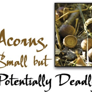 Acorn Poisoning in Horses