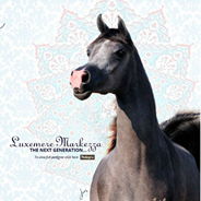 Luxemere Arabians