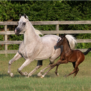 2019 Luxemere foal 2, Acevedo & Roberson