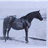 Tiara (Raseyn x Wierna) bay mare, foaled April 25, 1947