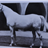 Sheeyn (Raseyn x Sheherzade) grey mare, foaled June 9, 1946bred by United States Government