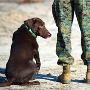 Reporting for duty: how companion pets help military veterans