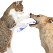 8 Ways to Improve Your Pets' Dental Health!