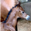 2019 Luxemere filly