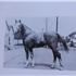Zadeyn (Raseyn x Sheherzade) grey stallion, foaled May 19, 1940