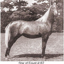 Star of Egypt