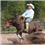 What Do I Need to Know About Western Horse Training?