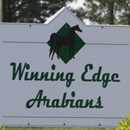Winning Edge Arabians