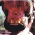 Vesicular stomatitis is an acute viral vesicular disease of cattle, horses, deer and pigs (and occasionally humans).