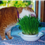 Wheatgrass for Your Pet's Health