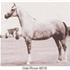 As soon as he came of age, Galimar was introduced into the breeding program with outstanding results. Bred to Bride Rose, he sired the filly Gali-Rose, who became an exceptionally beautiful mare as well as a great producer.