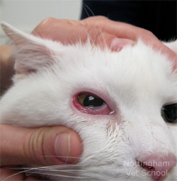 How Can I Get Rid Of My Cat Allergies
