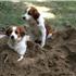 Xena and Max playing together in the sand! Too Cute! <3