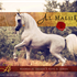 Looking forward to seeing the first foals by Al Maliik due 2014…beauties by Maliik coming soon!!!