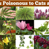 Poison and toxic plants to pets