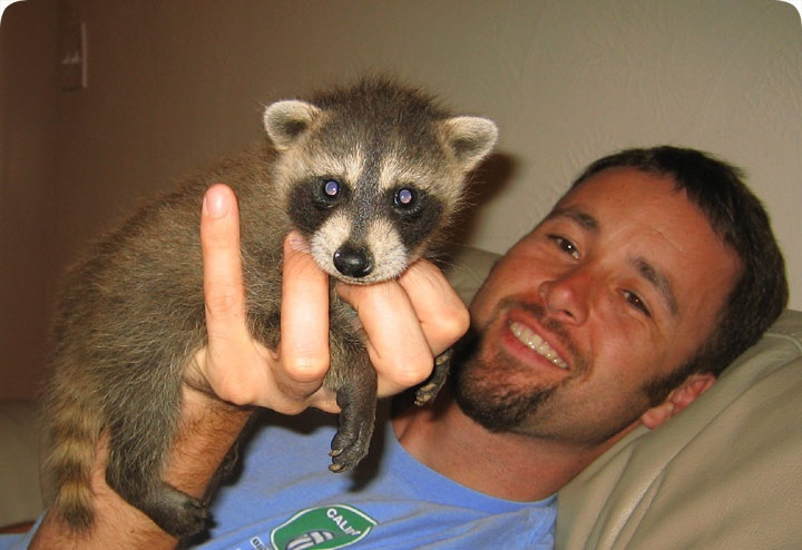 how to take care of a pet raccoon