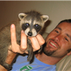 Not many people think of raccoons as pets, but they make great ones, if you're okay with their mischievous personality. Here's how to care for one!