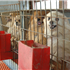 Support Humane Dog Breeding Law in North Carolina