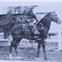 Shereyn (Raseyn x Sherlet) bay stallion, foaled May 14, 1932bred by W.K. Kellogg Institute