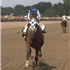 Photolog of a few Secretariat special moments