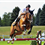 All You Need to Know About Horse Jumping