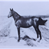 Zafar (Raseyn x Roshana) bay mare, foaled August 31, 1937