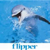 The real Flipper - definitely one of my boyhood friends