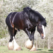 Shire stallion who saved mare's life named animal hero of the year