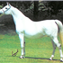 Gaffi runs strong in the present day program of Gainey Arabians being the dam line on current herd-sire Gai Monarch, 2001 Canadian National Champion Stallion and U.S. Top Ten Stallion, a son of Ferzon son Gai Parada and Gai Dream daughter, Gaishea.