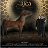 AJ Thee Luca shows tonight at the Region 12 show presented by Mike Wilson!