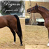 HC Elitist at 2yrs old and his sire *Pogrom at 8yrs old
