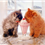 Tips to Make Sure Your Cat Has a Proper Diet
