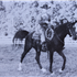 Shereyn (Raseyn x Sherlet) bay stallion, foaled May 14, 1932