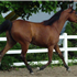 Fantasy M {Thee Masterpiece x WB First Edition (Ponomarev). Foaled 2009. Bred by McLaughlin Arabians. Owned by Ken & RaNae B Bangerter, Ut, USA.