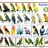 Types of Birds you can own and some of their qualities