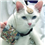 Deafness and Hearing Loss in Cats