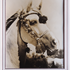 Mamdouha, purebred Arabian mare imported from Egypt in July, 1947'.