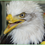 Beauty the bald eagle has a prosthetic beak...What a great story!