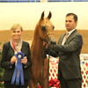 Luxemere Tulio & Sandro Pinha at his first show. The 2014 Arabian Desert Classic Show, Scottsdale Az
