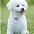 If you have always longed to have a canine pet and have not been able to do so because of lack of time, then think again. There are a few Low Maintenance Dog Breeds.