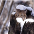 Animals in Winter - the contrast creates some of the most beautiful pallets