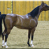 Lady Mystique M, foaled 2009. ABWC Top 5, Region 4 Top 5, Deseret I Champion, Deseret II Reserve Champion, AHAU 2012 High Point Pure Bred Mare Sire: Thee Masterpiece x Lady Marev Bred by McLaughlin Arabians. Owned by Ken & RaNae B Bangerter, Ut USA