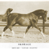 Rageyma was to produce two champion sons by Gaysar: Skorage, who became chief herd sire for Ed Tweed's Brusally Ranch, and Galimar, a champion himself and used in the Gainey program.