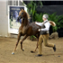 Luxemere Tulio - Yearling Colt Class - Arabian Breeder Finals, Scottsdale, October 2015