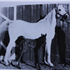 Sheeyn (Raseyn x Sheherzade) grey mare, foaled June 9, 1946