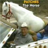 Meet Patches, The Convertible-Cruising, Burger-Eating Pet Horse