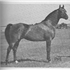 "For the next three decades horses such as Gazon, Galatina, Raffon, Gavrelle, Gai Adventure, Gaizon, Ga-Rageyma, Gafferra, Ga-Gajala, Shar Mar Ferzay and Gai Champion became famous in their own right and helped perpetuate the Gainey ""look""."