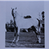 Teyn (Raseyn x Bint) grey stallion, foaled September 28, 1935